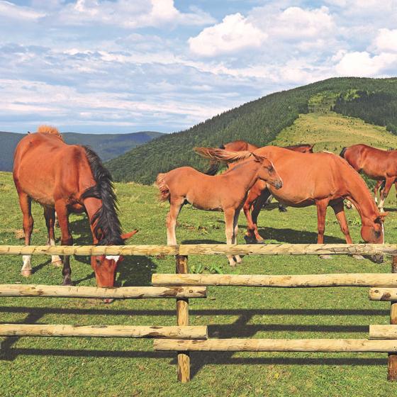 Pferdezaun / Pferdekoppel naturgewachsen / massiv